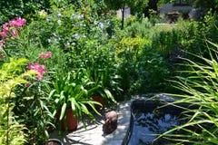 Малый пруд в саде лета стоковое фото rf