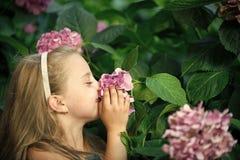 Малый ребёнок с усмехаясь стороной среди розового цветения гортензии стоковое фото rf