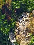Малый сад моря стоковые изображения rf