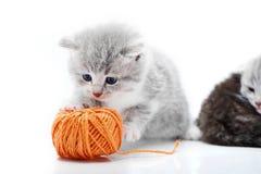 Малый серый пушистый прелестный котенок играет с оранжевым шариком пряжи пока другие киски играют на заднем плане внутри Стоковые Фотографии RF