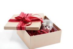 Малый серый пушистый прелестный котенок сидя в картонной коробке с красным смычком дня рождения на верхней части присутствуя для  Стоковые Фотографии RF