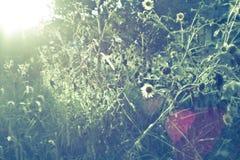 Малый солнцецвет Стоковые Изображения