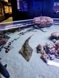 Малый танк акулы на аквариуме Остина Стоковые Изображения RF