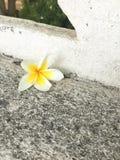 Малый цветок Стоковое Изображение