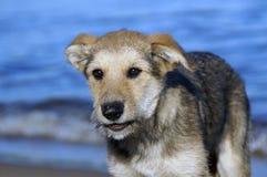 Малый щенок на озере Стоковые Фотографии RF