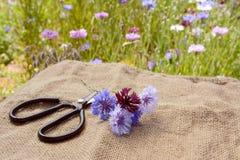 Малый posy cornflowers на hessian с флористом scissors стоковые изображения