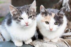 2 малых запятнанных котят Стоковая Фотография RF