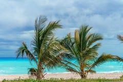 2 малых зеленых пальмы против лазурного карибского моря стоковое фото