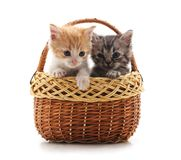 2 малых котят в корзине стоковые изображения