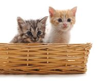 2 малых котят в корзине стоковое изображение rf