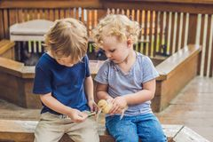 Малыши девушка и мальчик играя с утятами в petting зоопарке стоковое изображение rf