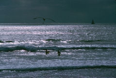 малыши играя волны Стоковые Фото