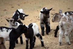 малыши фермы Стоковое Фото