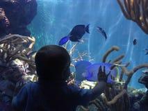 малыш рыб Стоковые Изображения