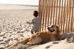 Малыш с собакой на пляже стоковое изображение rf