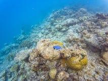 Мальдивские кораллы рифа стоковые фотографии rf