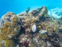 Мальдивские кораллы рифа стоковое фото