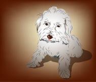 мальтийсный смешанный щенок пуделя Стоковое Изображение RF