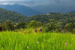 2 мальчика на цветочном саде горы понедельника Chaem в Чиангмае, Стоковые Фотографии RF