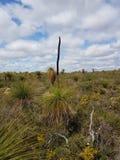 Мальчики деревьев травы черные стоковое фото rf