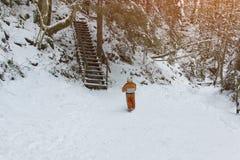 Мальчик в оранжевом комбинезоне стоя около лестниц во дне снежной coniferous зимы леса солнечном задний взгляд стоковое изображение rf