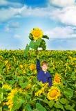 Мальчик в поле солнцецвета Стоковые Изображения
