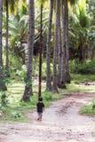 Мальчик в роще ладони Стоковое Фото