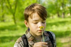 Мальчик в цветке одуванчика обнюхивать парка, портрет конца-вверх стоковое фото