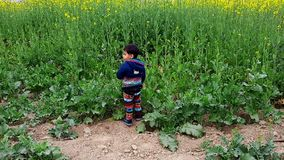 Мальчик 2 год играя в mustered поле видеоматериал