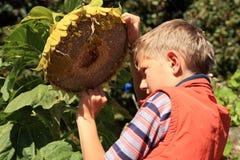 Мальчик есть семена подсолнуха стоковые фото