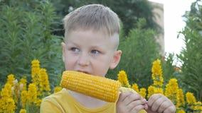 Мальчик ест удары мозоли ребенок в желтой футболке на предпосылке желтых цветков с закусками аппетита сток-видео