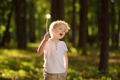 Мальчик играя с пушком одуванчика делать желание стоковое фото rf