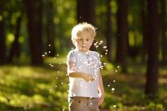 Мальчик играя с пушком одуванчика делать желание стоковое изображение rf