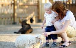 Мальчик малыша и его мать смотря овец Стоковые Изображения RF