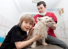 Мальчик на ветеринаре с его собакой стоковые изображения
