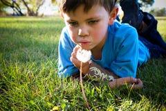 Мальчик одуванчика Стоковое фото RF
