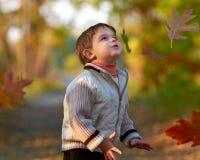 мальчик осени меньший парк Стоковые Фотографии RF