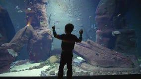 Мальчик ребенка смотрит красивый подводный мир с много различных рыб которые плавают в аквариуме видеоматериал