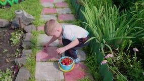 Мальчик собрал красные зрелые ягоды в саде Ребенок идет с полным ведром ягод дальше Сбор в видеоматериал