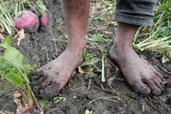 Мальчик фермера редиски с тинными ногами Стоковые Фотографии RF