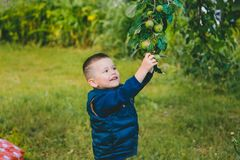 Мальчик хочет достигнуть зеленое Яблоко стоковое изображение rf