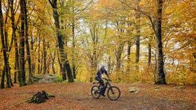 Мальчик MTB в лесе бука стоковые фотографии rf
