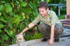 Мальчик petting кот стоковые фотографии rf