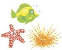 Мальчишка моря, морские звёзды и рыбы Стоковые Фотографии RF