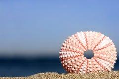 мальчишка моря Стоковая Фотография RF