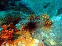 мальчишка моря Стоковое Изображение RF
