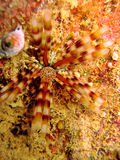 мальчишка моря Стоковое Изображение