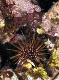 мальчишка рифа Стоковое Фото