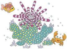 Мальчишка, рыбы и краб моря Стоковая Фотография