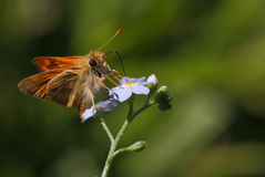 Малюсенькая бабочка на лиловом цветке Стоковые Фотографии RF